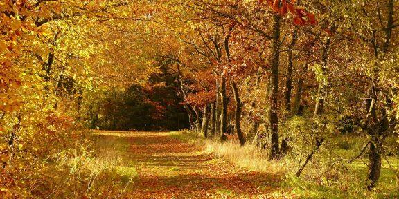 napsütés, ősz
