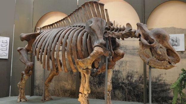 """A modern ember idejében is élt még a szibériai """"unikornis"""" nevű orrszarvú"""