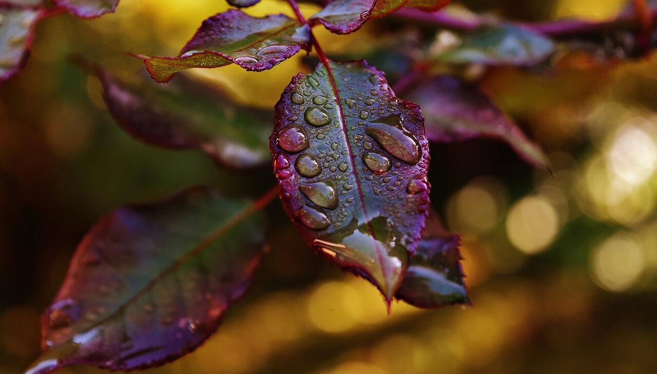 Eső, majd hózáporok karácsonykor
