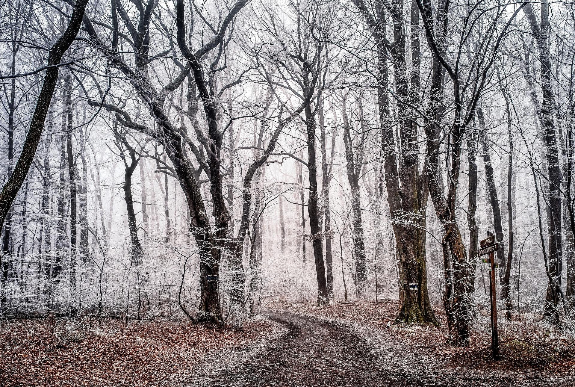 Télen is túrázni hívnak a nemzeti park munkatársai