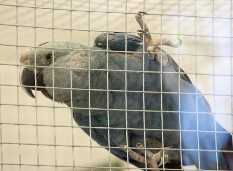 Egyre több madárfaj a kihalás szélén